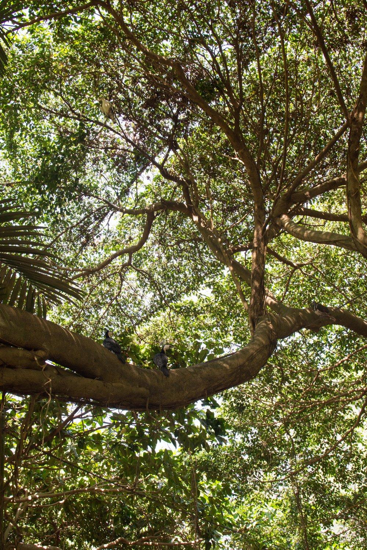 Aviary at The Wildlife Habitat in Port Douglas, Australia