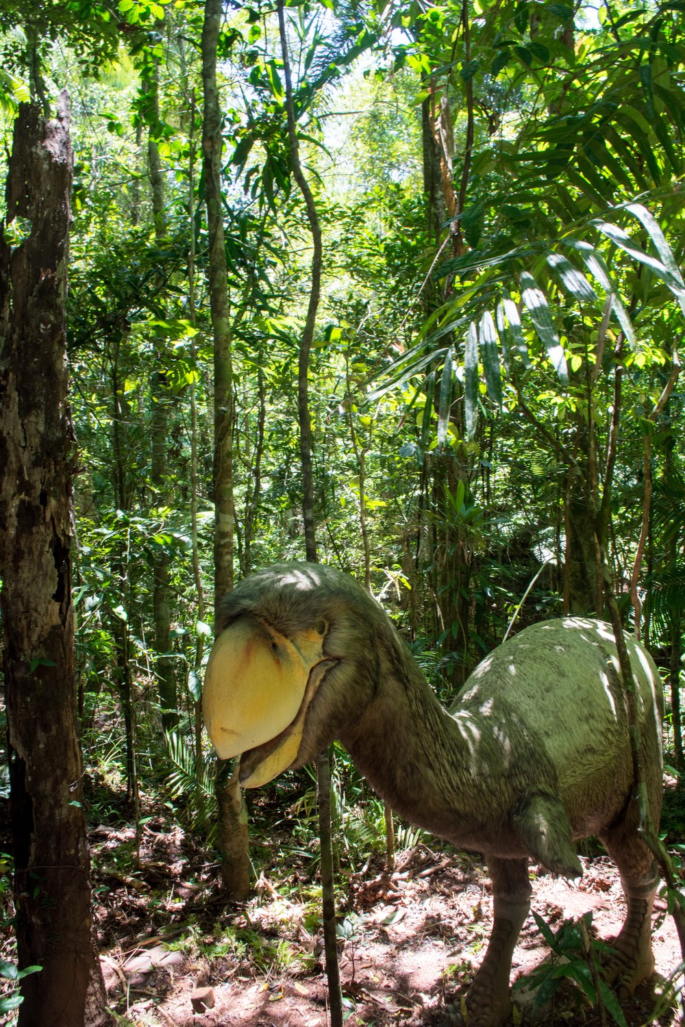 Daintree Discovery Centre – Australia