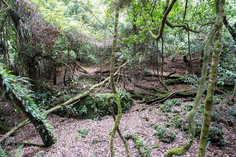 Jurassic Rainforest Ground from the Scenic Walkway