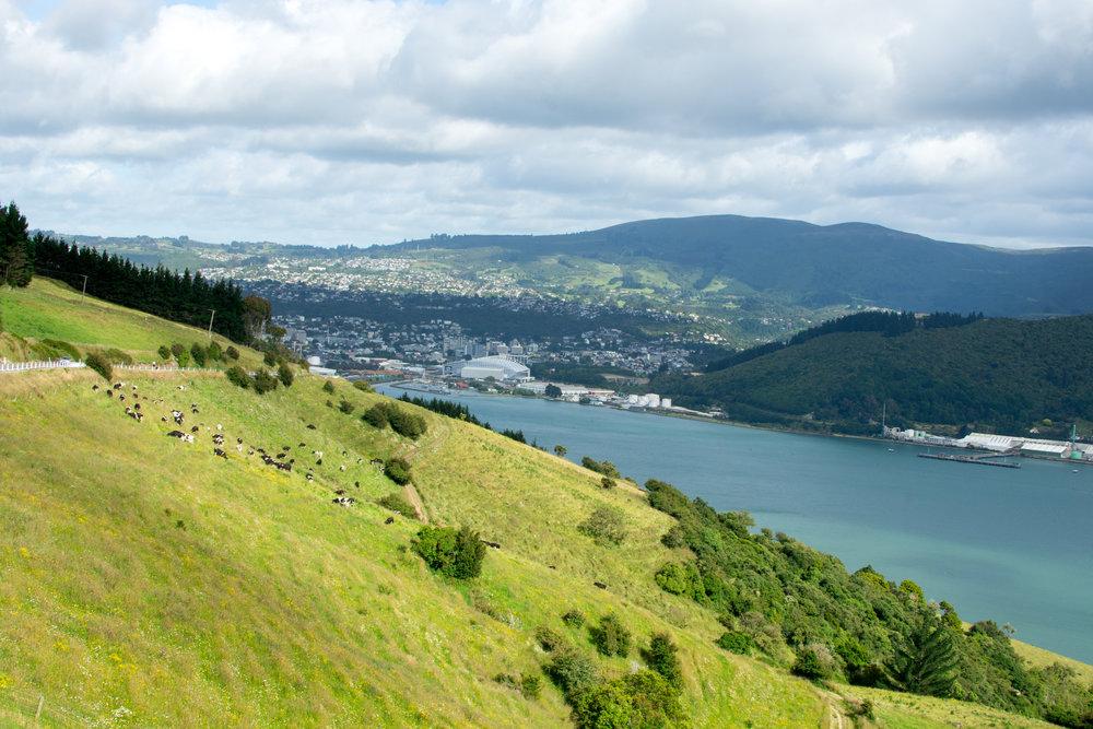 Town of Dunedin