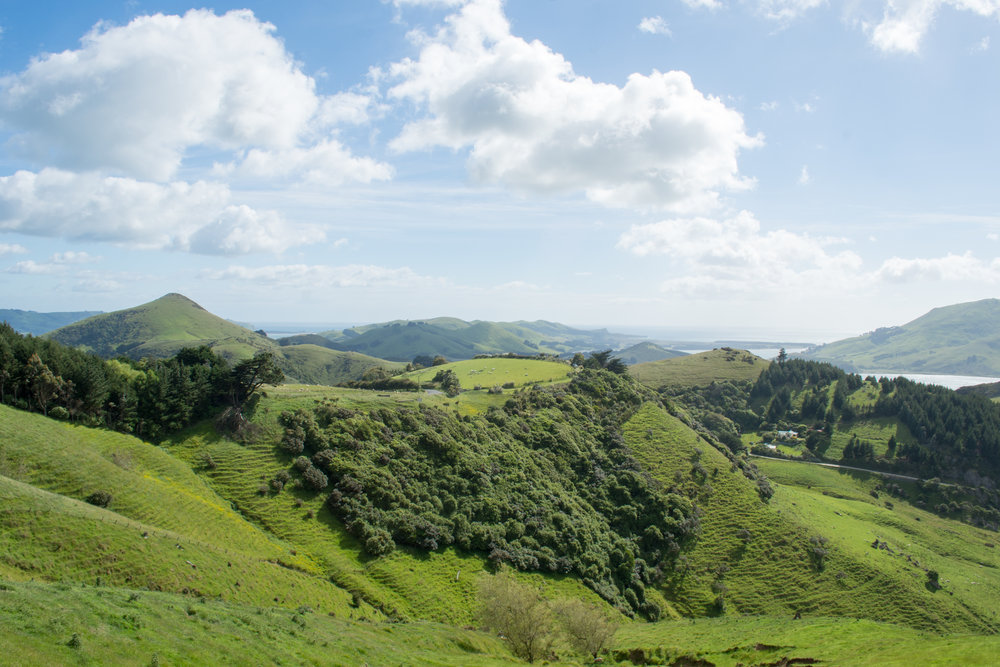 Otago Peninsula from Highcliff Road