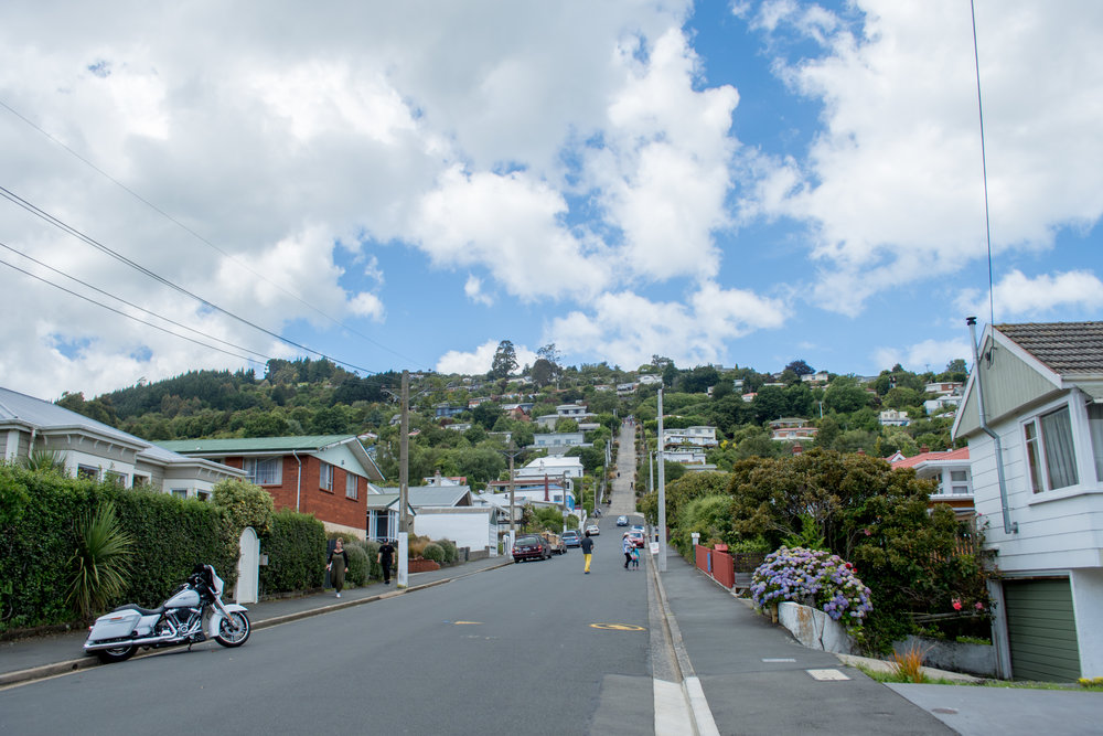 Baldwin Street – The World's Steepest Street