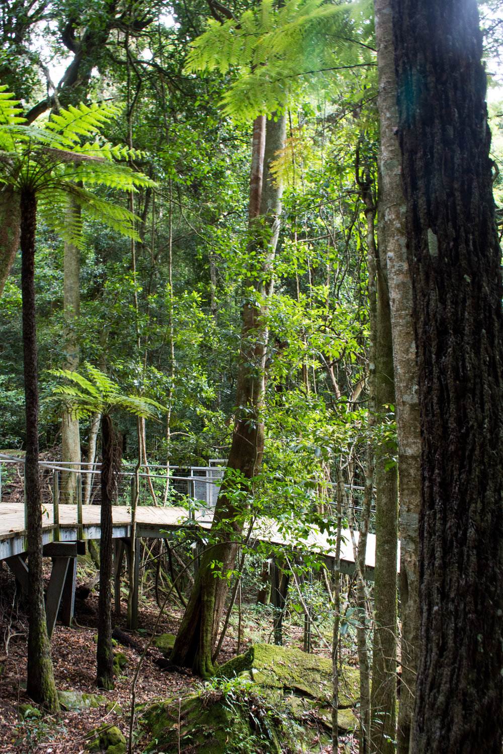 Scenic World Walkway