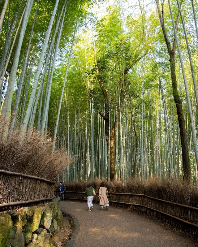 After spending 6 cloudy days in Tokyo, we were expecting the same in Kyoto.  We got up early and headed out to the Arashiyama, excited for a dark and moody bamboo grove.  Instead, we got the first sunny day of our trip. ⠀⠀⠀⠀⠀⠀⠀⠀⠀ 📍Arashiyama, Japan⠀⠀⠀⠀⠀⠀⠀⠀⠀ ___⠀⠀⠀⠀⠀⠀⠀⠀⠀ #japan #bamboogrove #bambooforest #arashiyama #bamboo #japanese #asia #forest #sunny #kyoto #kyotojapan #earlymorning #bambootrees #ahappypassport #daytrip #arashiyamabamboo #sagano #walk #grove #wanderer #travelphoto #mytravelgram #tagsta_travel #beauty #tourist #ig_worldclub #worldcaptures #traveler #LP