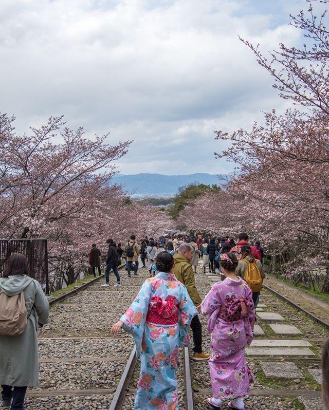 📍Keage Incline, Kyoto, Japan⠀⠀⠀⠀⠀⠀⠀⠀⠀ ___⠀⠀⠀⠀⠀⠀⠀⠀⠀ #keageincline #kyoto #kyotojapan #japan #asia #cherryblossom #cherrytrees #cherryblossoms #komono #spring #easter #flowers #japanese #ahappypassport #railroad #sakuraseason #park #nature #sakura #traveltuesday #wanderlust #ilovetravel #writetotravel #instavacation #postcardsfromtheworld #traveldeeper #igtravel #getaway #travelpics