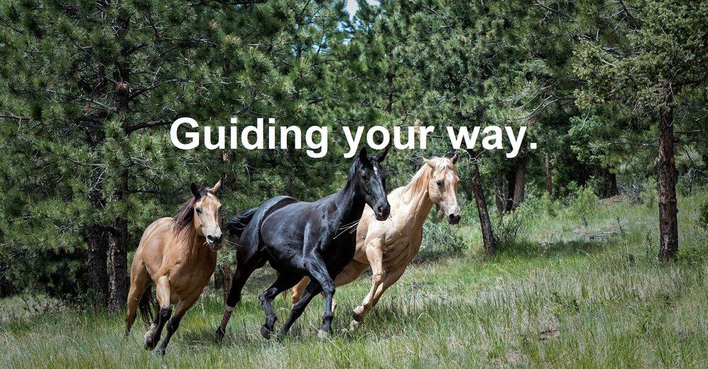 Horses Running-gene-devine-424017-unsplash - Copy.jpg
