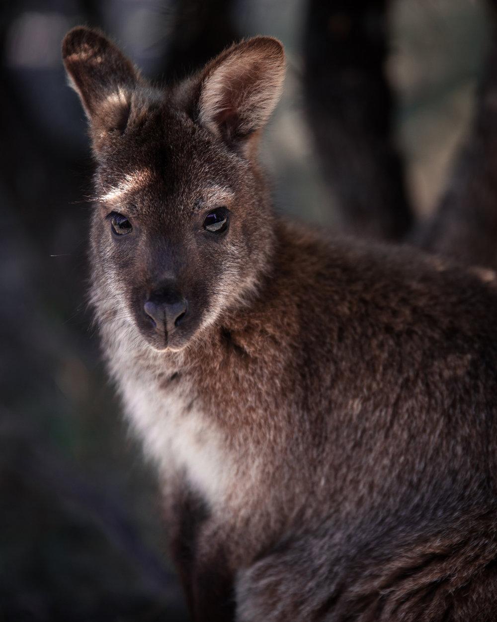 Tasmania6.jpg