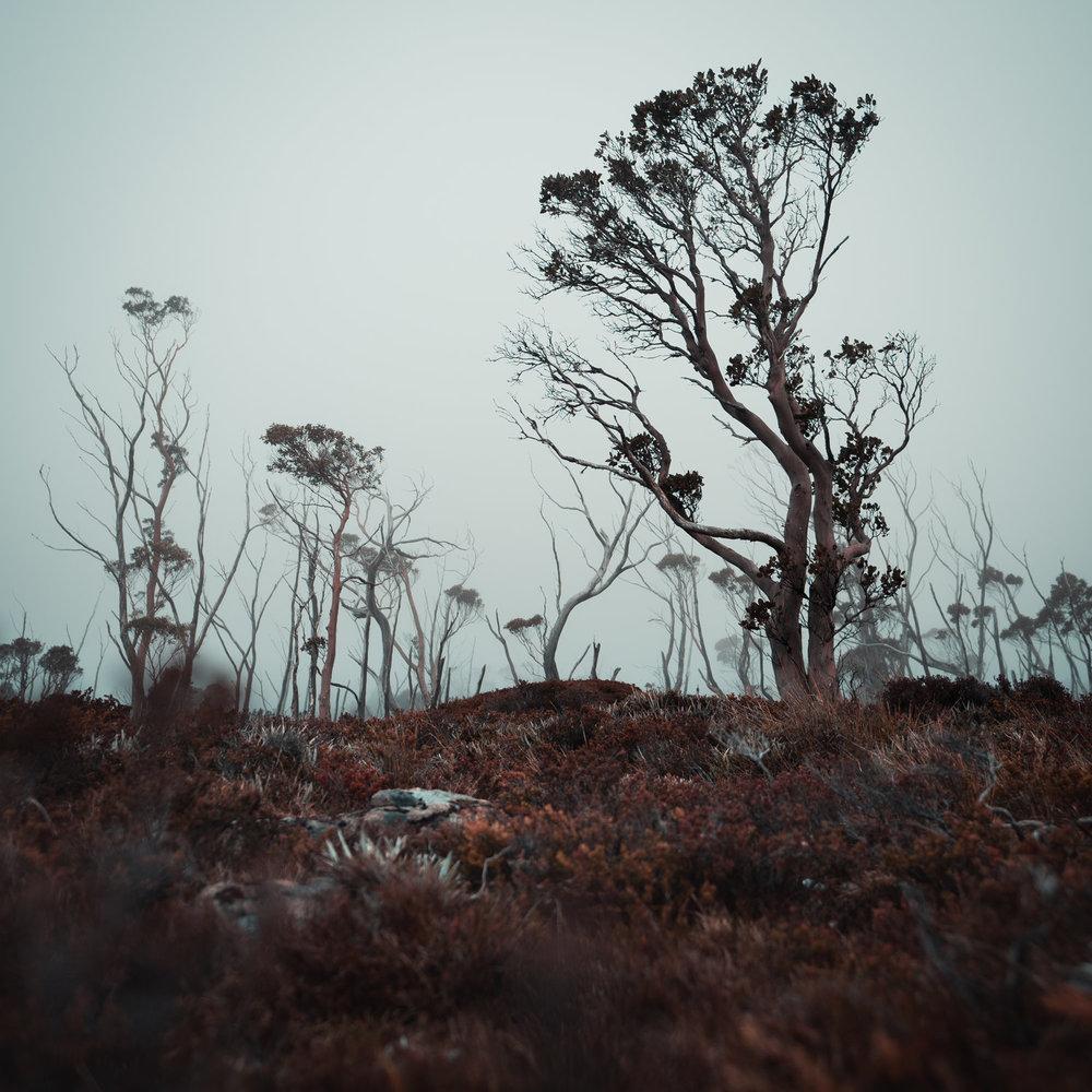 Tasmania5.jpg
