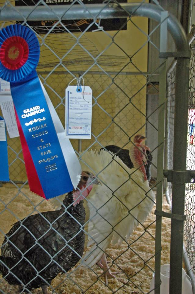 You can help us take in or judge fair entries