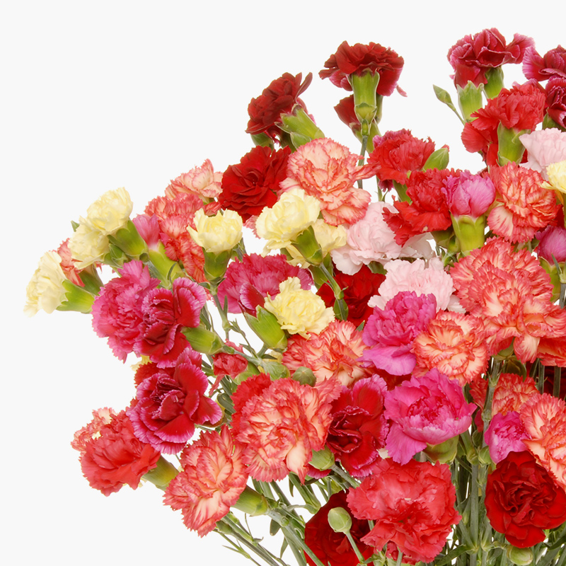 thumbs_our-flowers_carnations.jpg