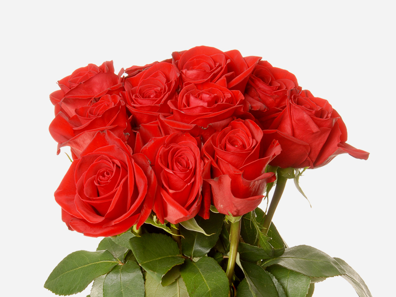 Dozen Rose Bqt 2