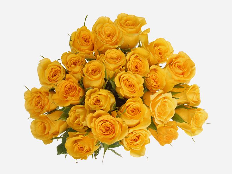 24 stem Roses 3