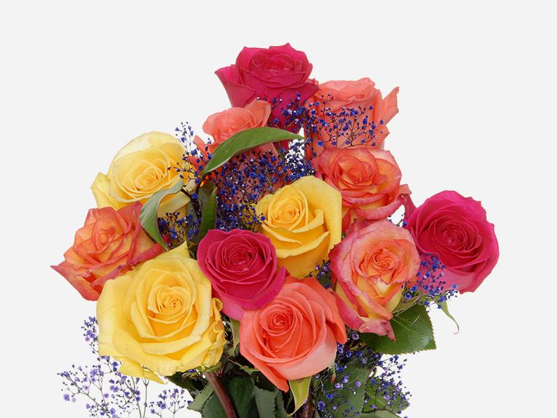 Rainbow Roses 1