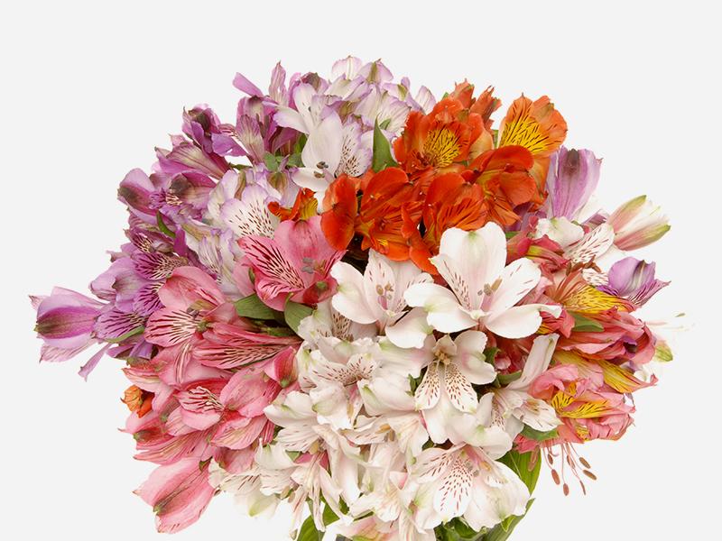 Consumer Bouquets 1