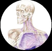 Dynamic NeuroMuscular Assessment: Jan 26th - 27th 2019