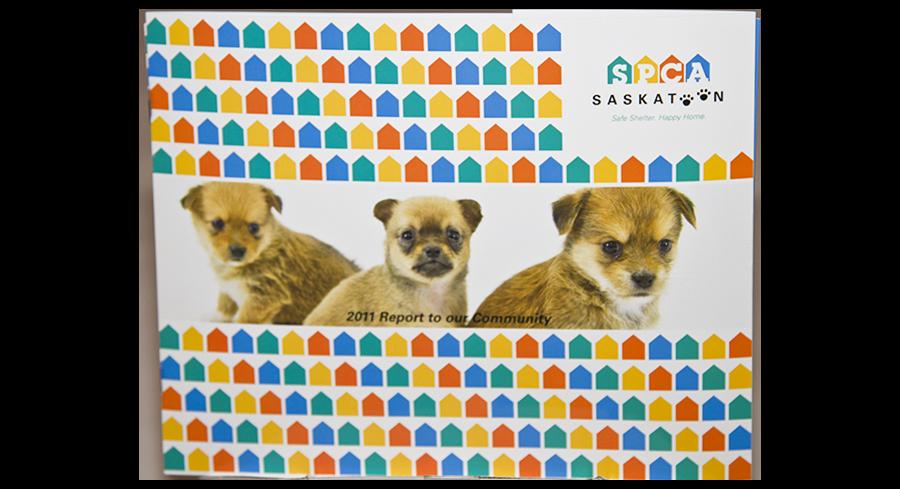 Commercial,Saskatoon,Photographer,Photography,Headshot,Saskatchewan,Photos,Saskatchewan,YXE,Studio,Renditure,Nature,Landscape,SK