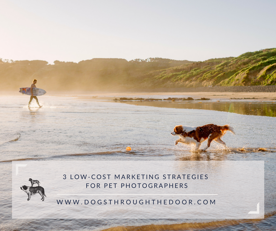 low-cost marketing for pet photographers.png