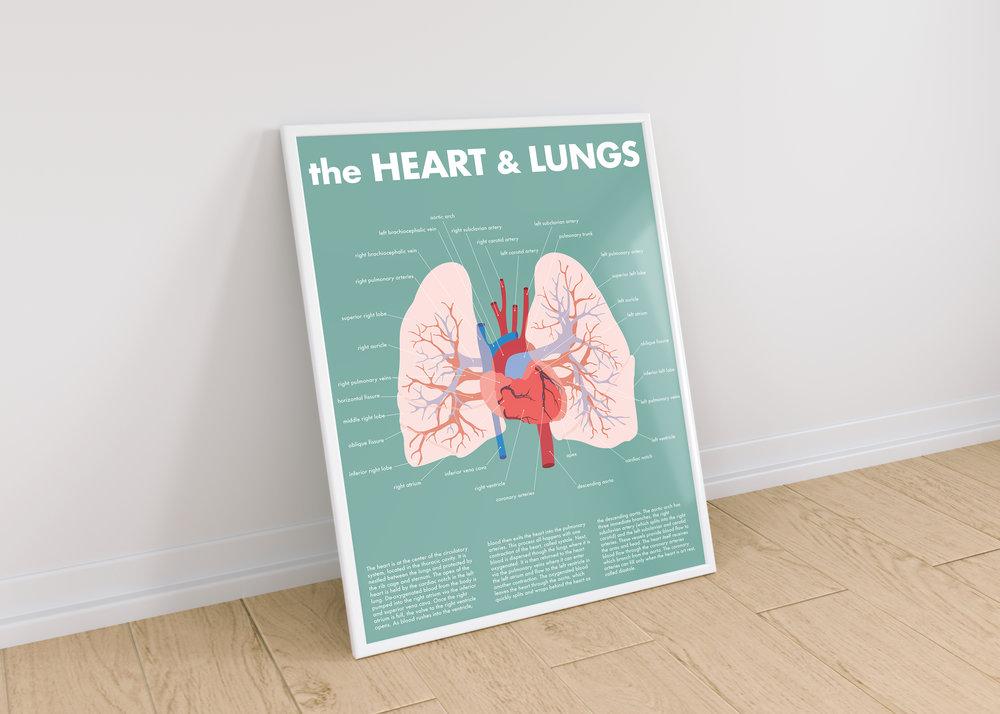 heart & lungs.jpg
