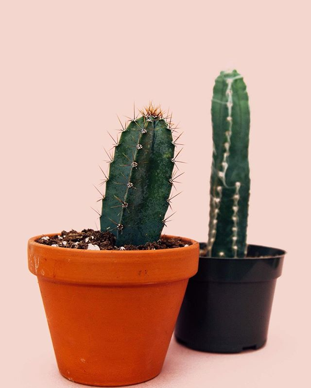 approachability: what role does it play in your brand? Are you an approachable brand or an aspirational brand? Just like these cutie cacti, you might be keeping your audience at a distance by not understanding how your brand fits into their lives. . . . . . . #beababe #babeco #kc #kcmo #kansascity #branding #marketing #approachability #brand #cactus #pink #millenialpink #816 #visitkc #smallbusiness #smallbusinessowner #letscollab #creative #creativepreneur #aspirational #localkc #womanownedbusiness #smallbizkc #marketinggram #instagood