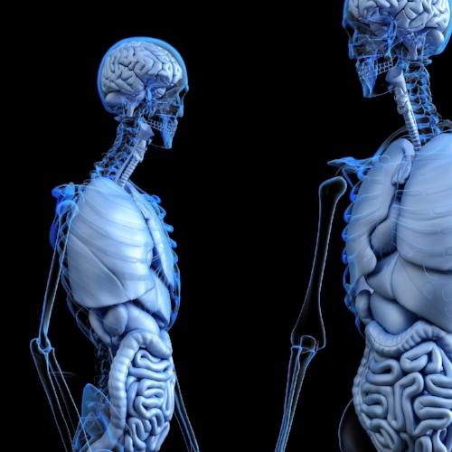 pix verdauung anatomical-2261006_1920.jpg