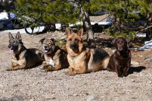Dogs-group-cabin.jpeg