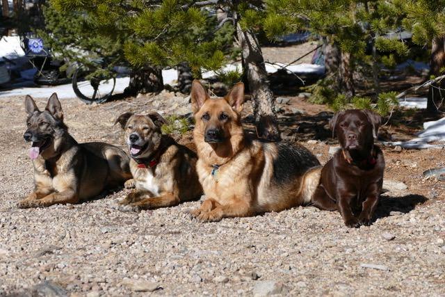 Dogs-group-cabin.jpeg