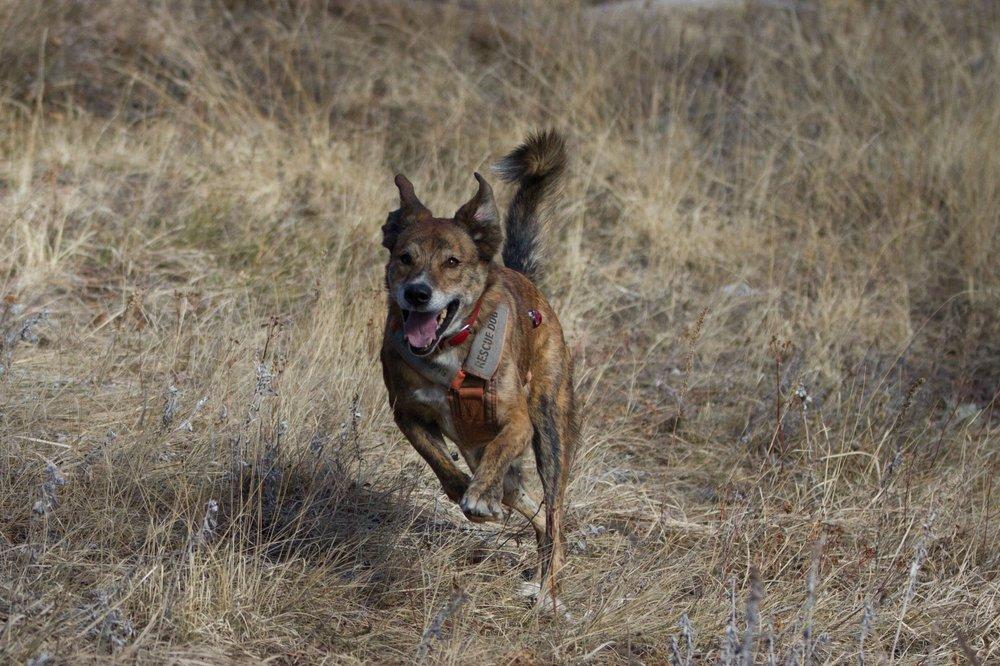 Scout running.jpg