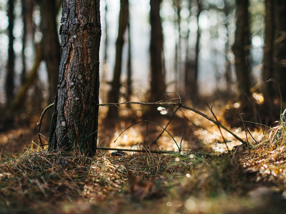 forest-933329_1920.jpg