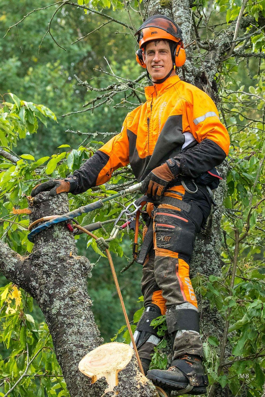 Magnus Dahlgren fäller träd