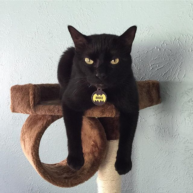 Today is Black Cat Appreciation Day! Bruce, who lives with our CSR Taylor, is *super excited* — can you tell? Show us pictures of your amazing house panthers! . . . . #blackcatappreciationday #blackcat #housepanther #catlife #catsofinstagram