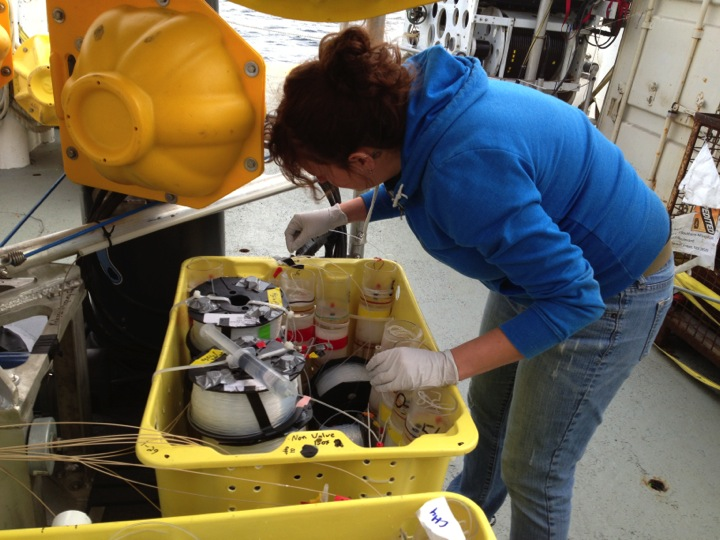 Dr. Beth Orcutt making final connections on the MIMOSA experiment on one of the ECOGIG landers. Photo by Laura Lapham.