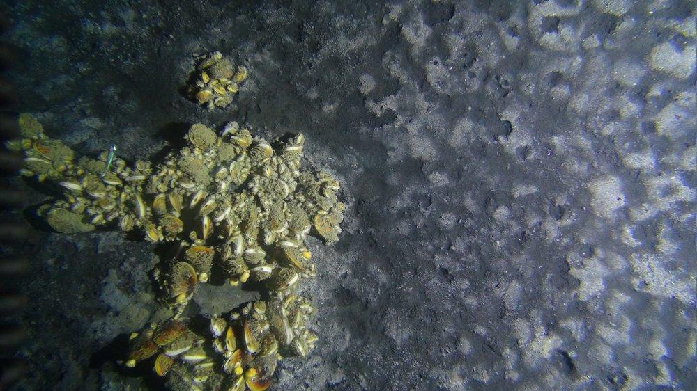 10-Mussels_0.jpg