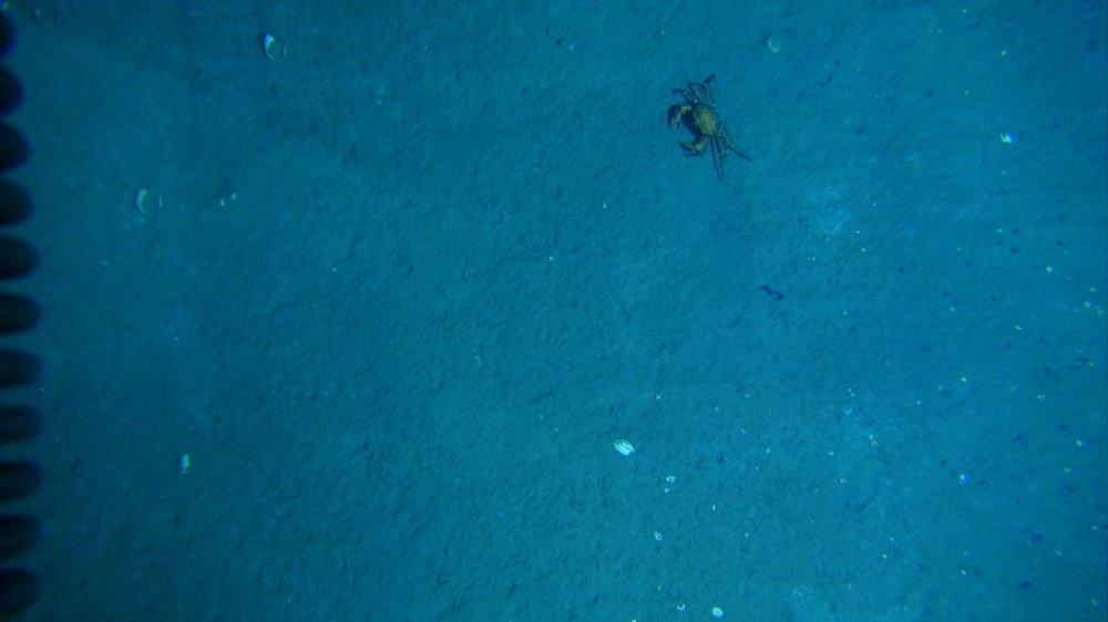 12-searching crab.jpg