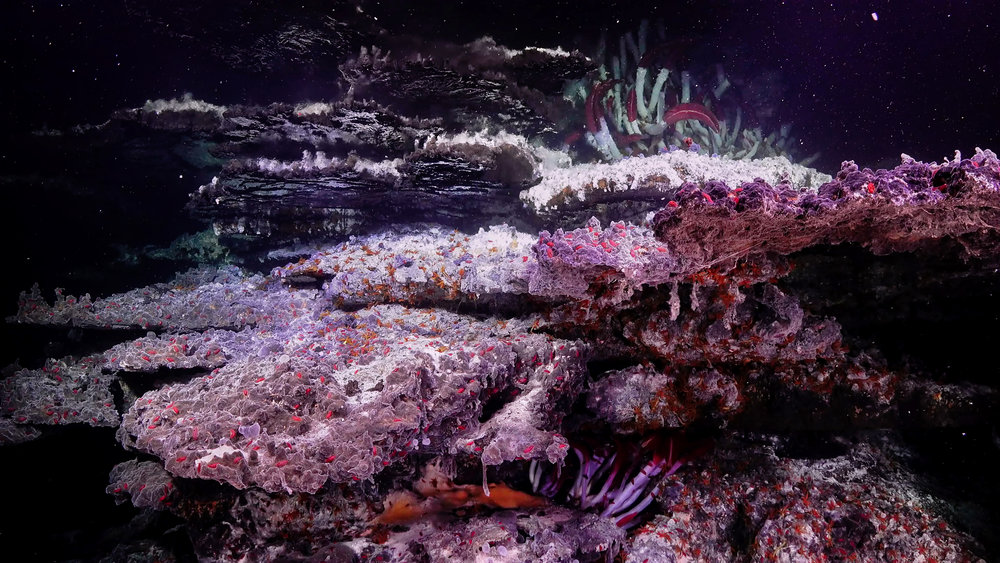 A spectacular hydrothermal vent structure in the Gulf of California.  (Image courtesy of Schmidt Ocean Institute)
