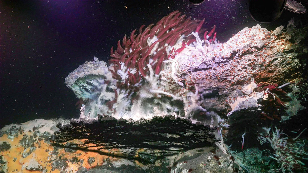 A hydrothermal vent structure in the Gulf of California.  (Image courtesy of Schmidt Ocean Institute)