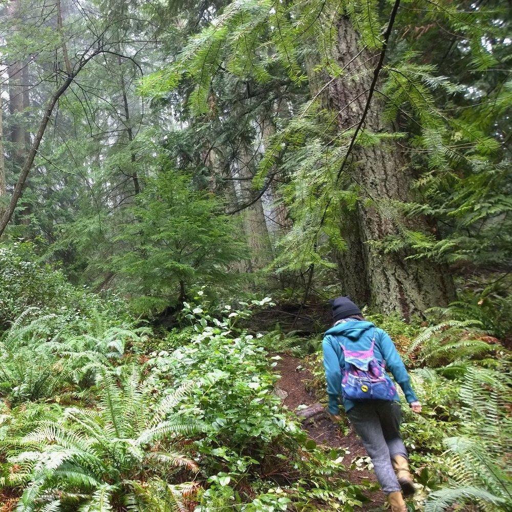Yumi_Nagumo-forest-adventure.jpg