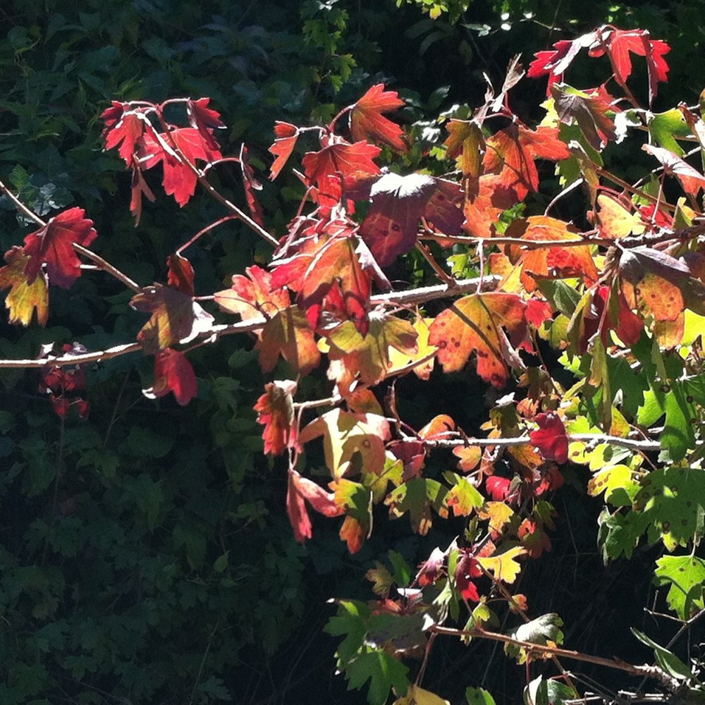 Being Well through the Seasons: Autumn -