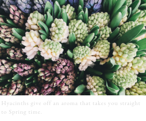 Webb-and-Farrer-Spring-Colour-Palette-Inspiration (4).png
