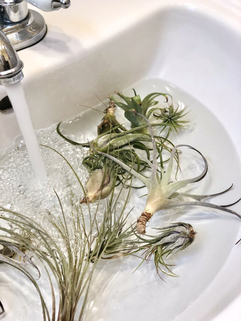 Sink of running water and air plants