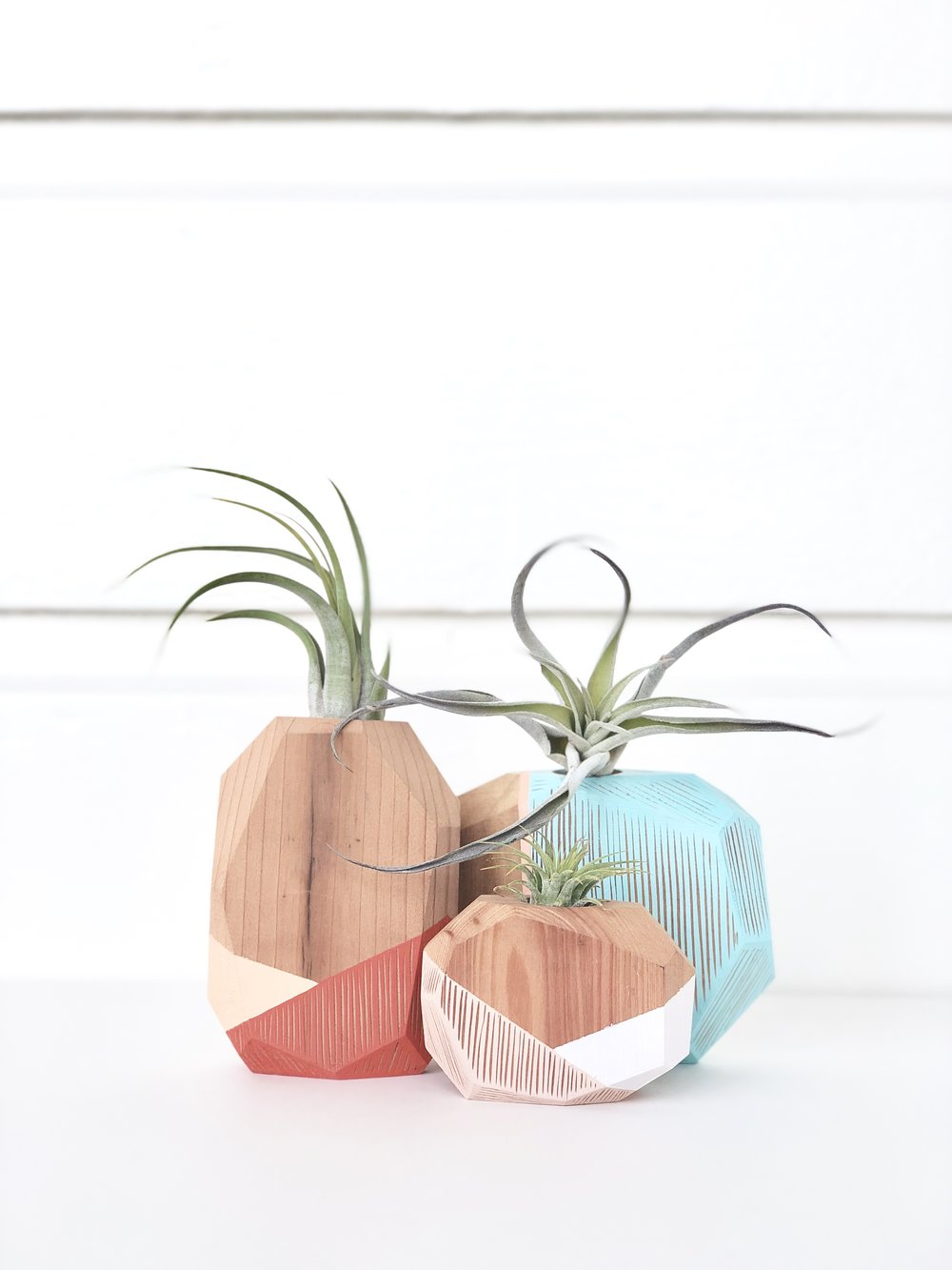 Air plants in hand carved vases by  Carmen McNall .