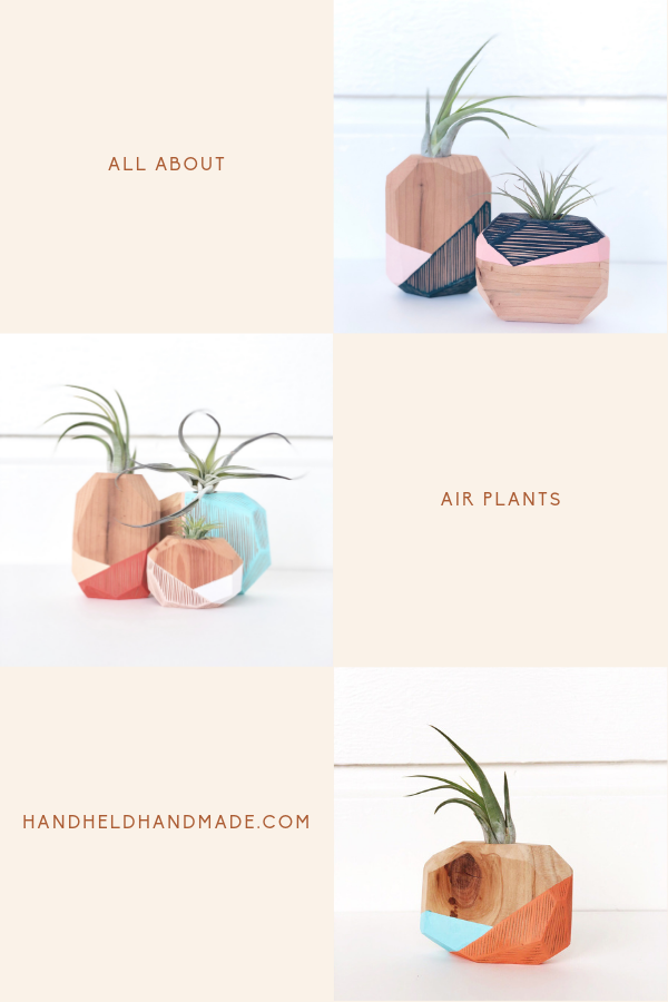 Everything You Wanted To Know About Air Plant Care