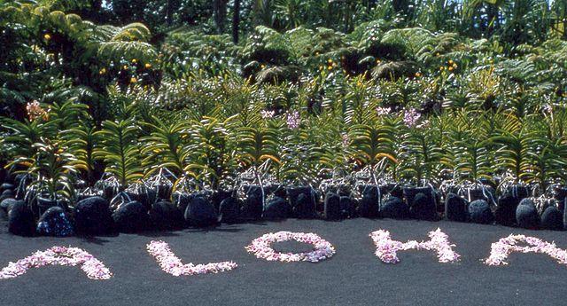 640px-Flowers_arranged_to_ALOHA,_Hilo,_Hawaii