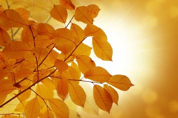 autumn-background-1380640829ckG