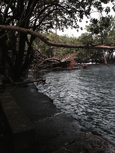 Ahalanui Park After Iselle