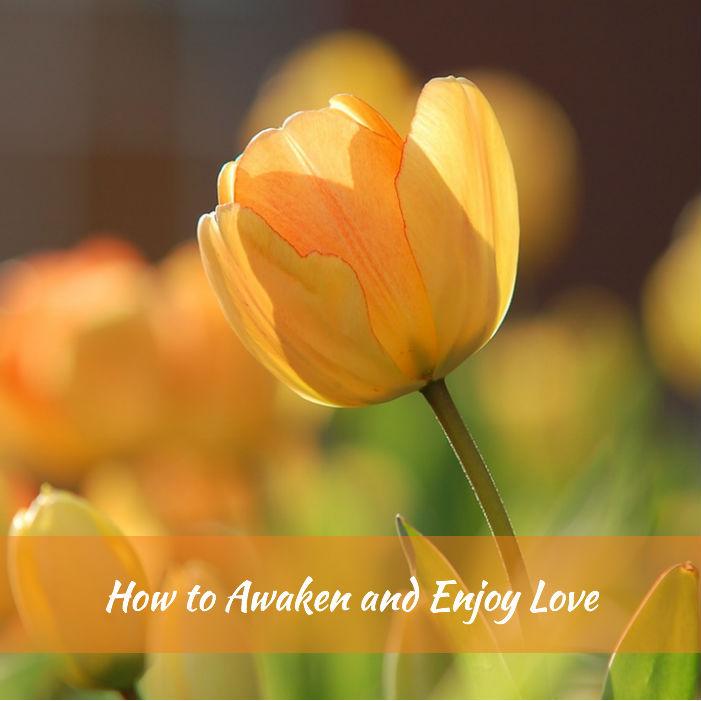 Awaken Love - Yellow Tulip