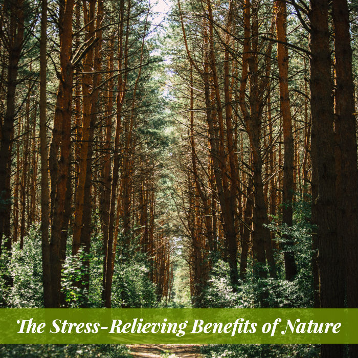 Would you like to reclaim your calm, your cognitive clarity, and your productivity. Discover the stress-relieving benefits of nature.