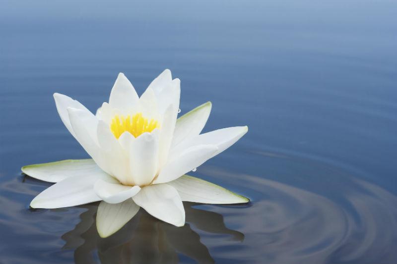 Joyful Wisdom Letter - Lotus