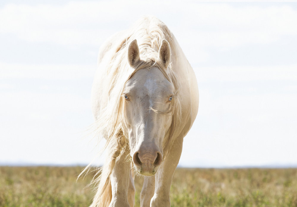 Mustang Monument, Nevada, USA.