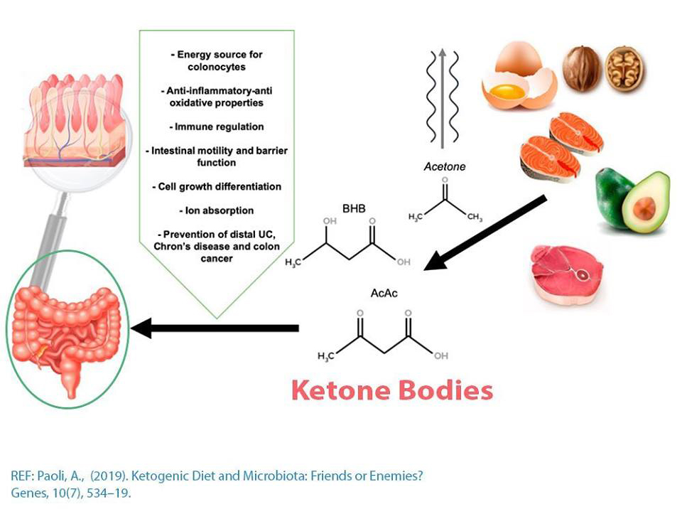 Ketogenic Diet And Gut Microbiome Ketonutrition
