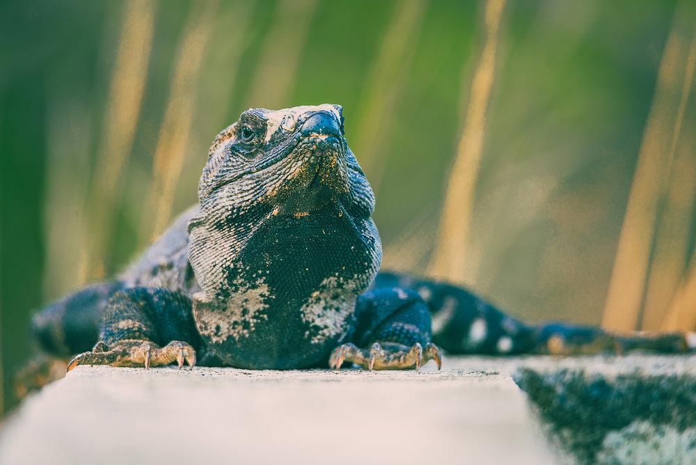 isla holbox | Quintana Roo